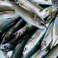 Kağıtta Soslu Kolyoz Balığı Tarifi