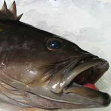 Lagos Balığı Tarifi