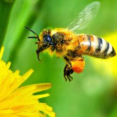 Arı ve Arıcılık Hakkında Temel Bilgiler