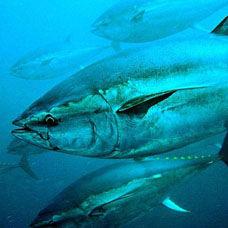 Balık Pastırması Tarifi