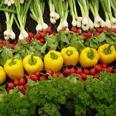 Organik Tarımın Amaçları Nelerdir?