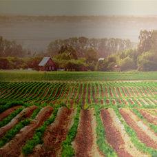 Geleneksel Tarım ile Organik Tarım Arasındaki Fark