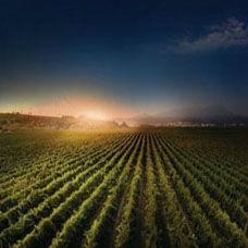 Organik Tarım'ın Tarihi