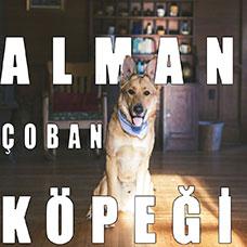 Alman Çoban Köpeği (Alman Kurdu) Hakkında Tüm Bilmeniz Gerekenler