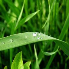 Bitkilerin Kullanım Şekilleri
