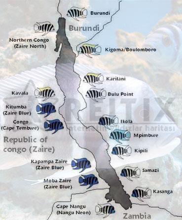 frontoza türleri