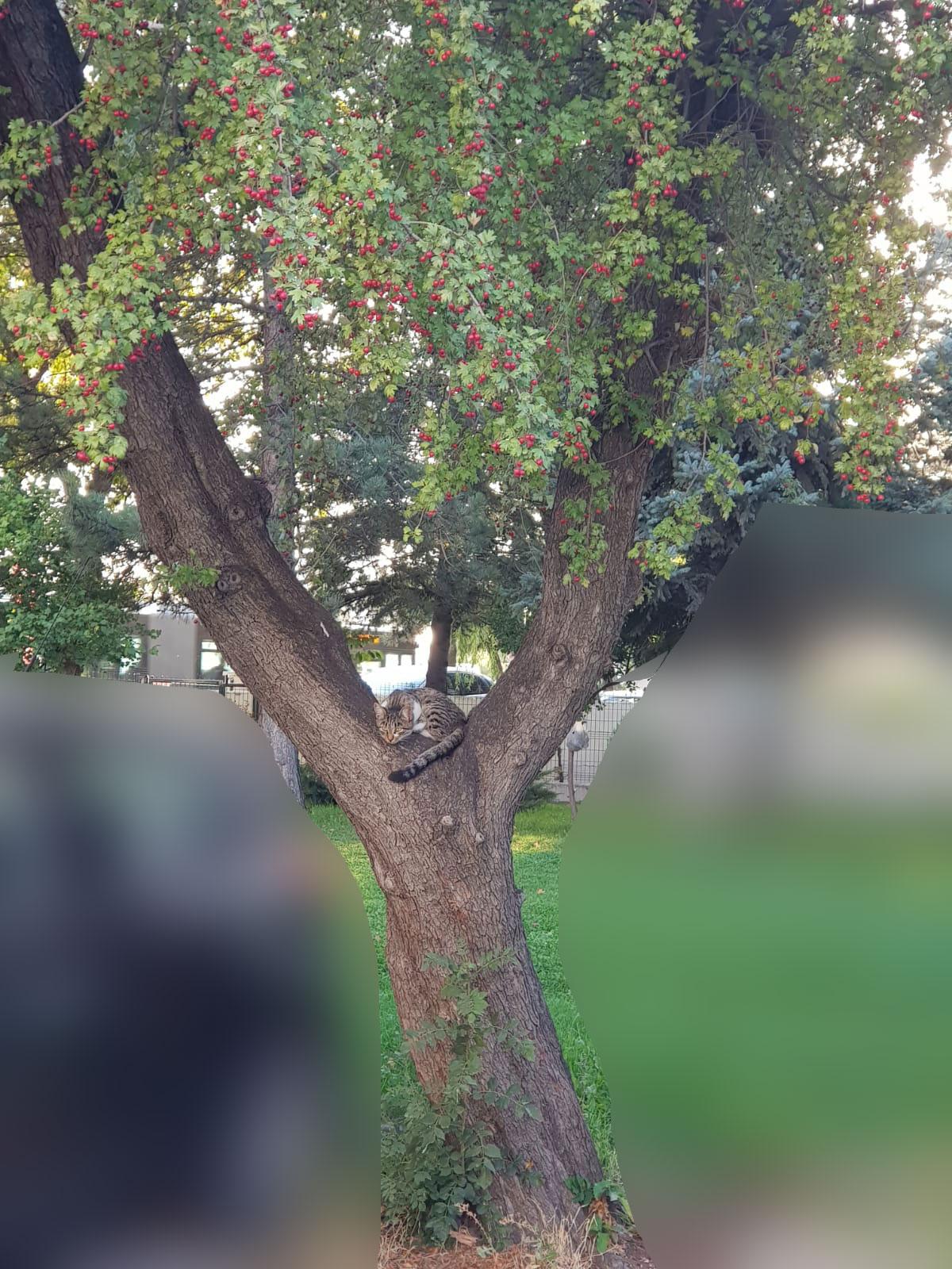 ağaçta kedi