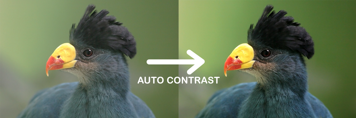 photoshop auto contrast before after