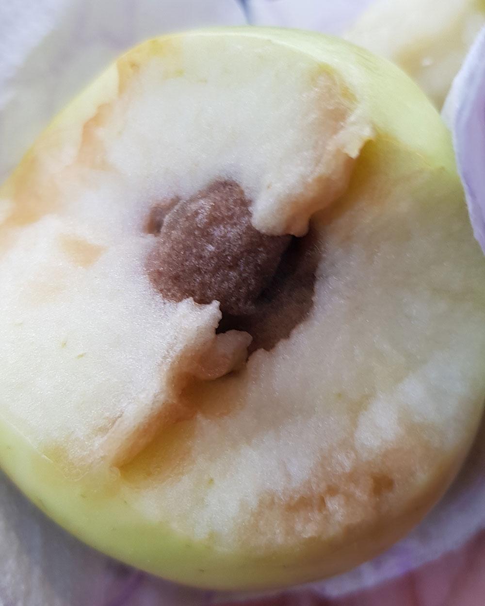 küflü elma