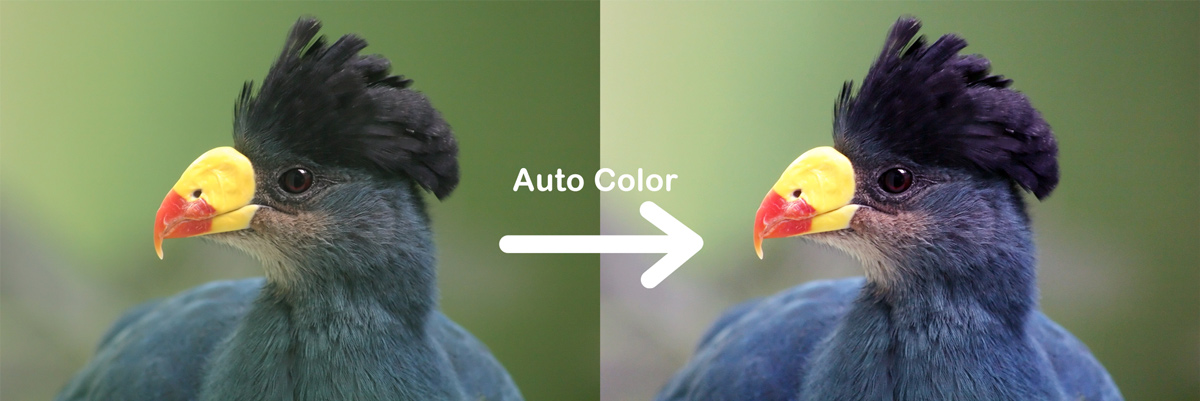 photoshop auto color before after