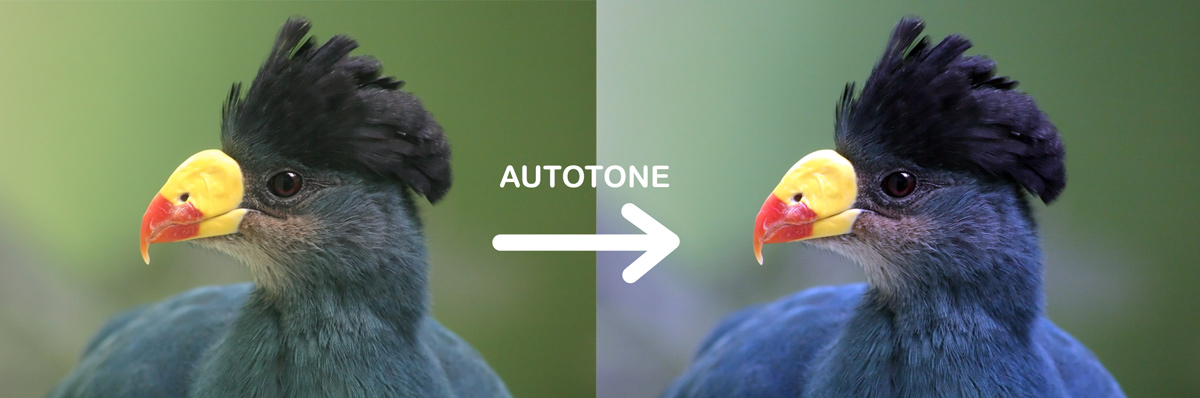 photoshop autotone before after